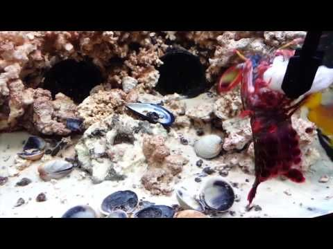 True Facts About The Mantis Shrimp (Completely true and HILARIOUS)
