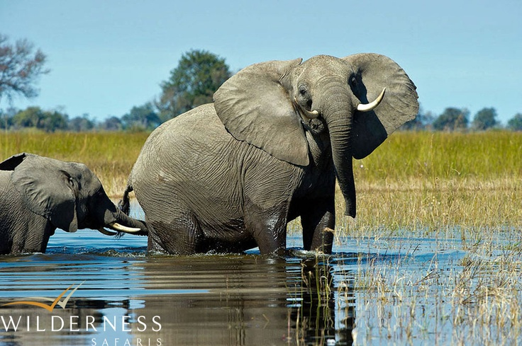 Vumbura Plains - awesome game viewing from the boat or the vehicle. #Safari #Africa #Botswana #WildernessSafaris