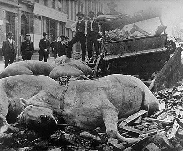 1906 Earthquake: Falling bricks killed these horses in the fish wholesalers' district along Sacramento above Montgomery Street. This entire area later burned during the Great Fire.