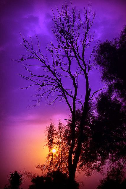 Sunset At Areen: God Creations, Purple Sunsets, Colors, Trees, Pink, Beautiful Sunsets, Sunri Sunsets, Birds, Purple Sky