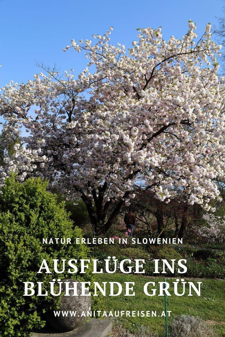 Natur Erleben In Slowenien Ausfluge In Garten Und Parks In 2020 Slowenien Reisen Ausflug