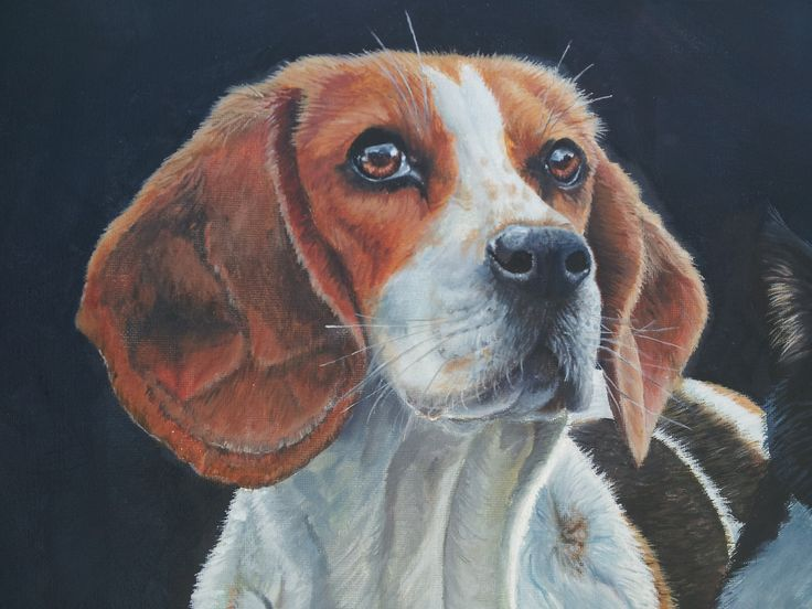 To commission a pet portrait drop me a line at new.life1965@hotmail.com Gift vouchers also available