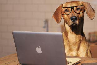Hogyan kell blogot indítani? - mi megtanítunk arra, hogy sikeres légy.