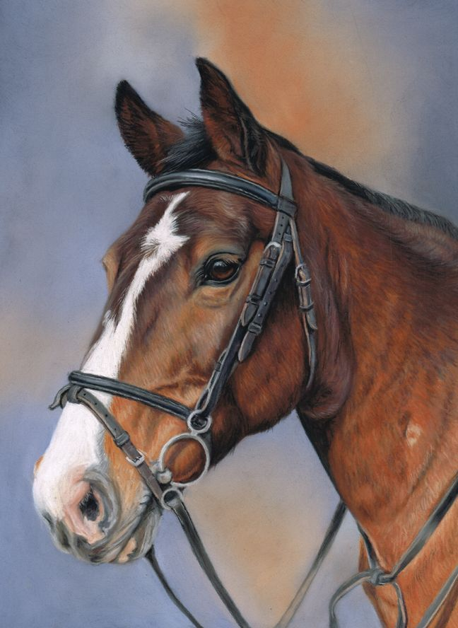 Horse portrait, commission 11x9 inches, pastel.