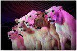 Fundacja Splotu Ramiennego - charytatywna gala w Cyrku Korona między innymi dla naszych podopiecznych :)