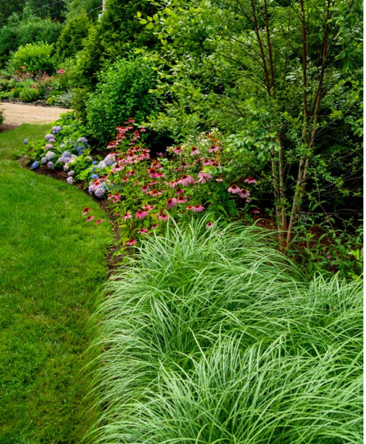 1000 images about berm on pinterest for Border grasses for landscaping