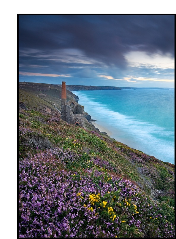 Abandoned tin mine on the Cornish coast, UK with heather and gorse in the foreground ... photo by David Speight