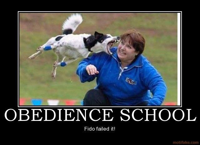 Ouch!: Obedience Schools, Schools Humor, Dogs Stuff, Funny Pictures, Animal Giggl, Demotivational Posters, Funny Stuff, Funny Animal, Animal Funny