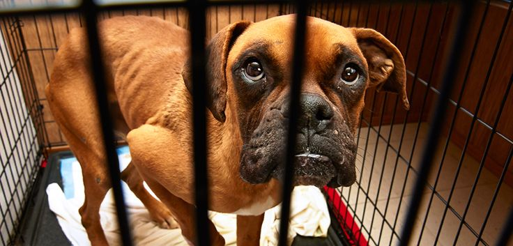 If you think someone you know is abusing animals, please speak up. The best thing you can do is report your suspicions of cruelty to your local law enforcement agency, humane organization, animal control agency or taxpayer-funded animal shelter. Read on for more information about how to recognize and report cruelty in your area.