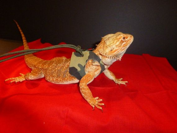 Large lizard harness by JDDragonDesigns on Etsy, $10.00