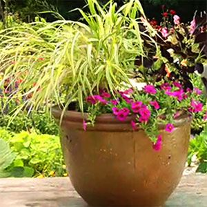 How to plant flowers in Containers Video!  39 cool container gardens | Video: How to plant a container | Sunset.com