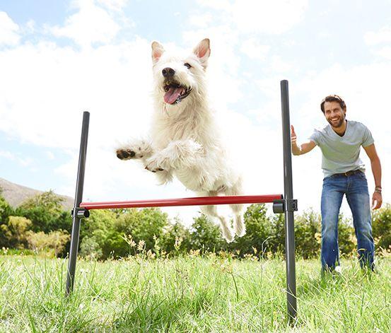 Zestaw podstawowy do agility dla psów #tchibo