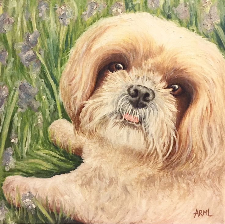 "Latest commission, the gorgeous Shih Tzu, Tia! Oil on canvas, 16""x16"""