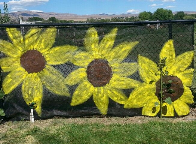 Chain Link Fence Camouflage With Sunflowers The Sprinkler