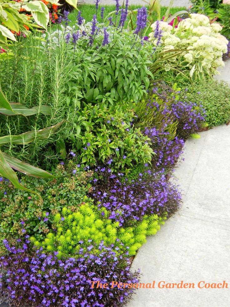 381 best Garden Beauty Yellow, Purple Blue Combinations images on