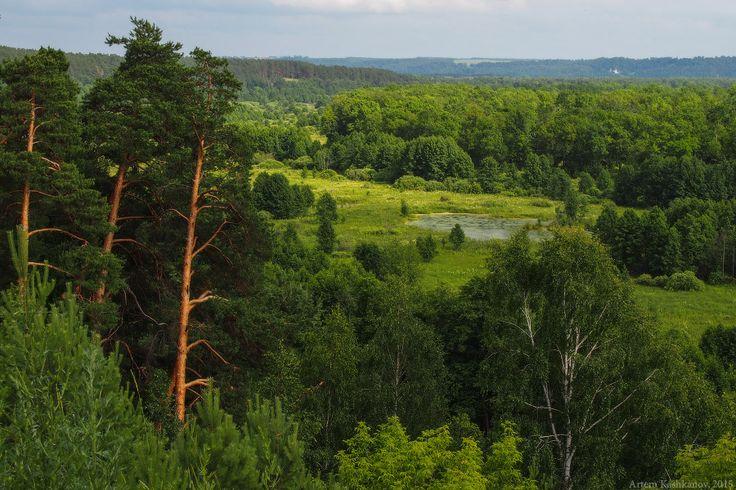 Летний пейзаж с соснами - Красивые летние фотографии