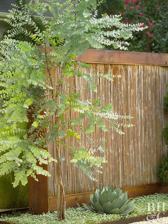 Lots of gardeners want fast-growing trees for privacy, especially when a tree is lost to old age or other factors. While it's true that fast-growing trees provide quick beauty, seclusion and shade, they may be short-lived and tend to have weak, brittle wood that can break during severe weather and ice storms. Here's how to choose wisely.