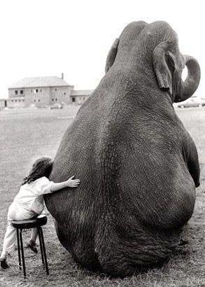 Elephants! Little Girls, Heart, Best Friends, Bestfriends, Elephant, Pets, Pictures, Rolls Tide, Baby Animal
