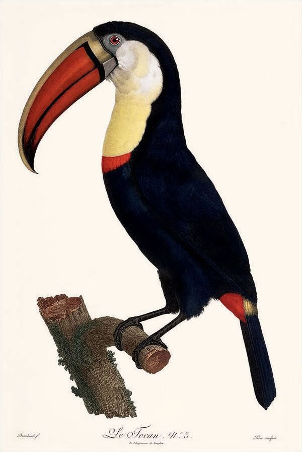 natural history illustration | Tumblr