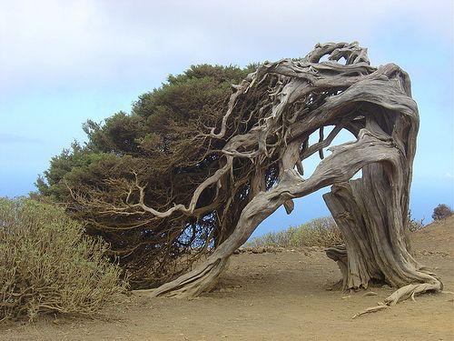 50 Most weirdest trees in the World - DigitalKamera