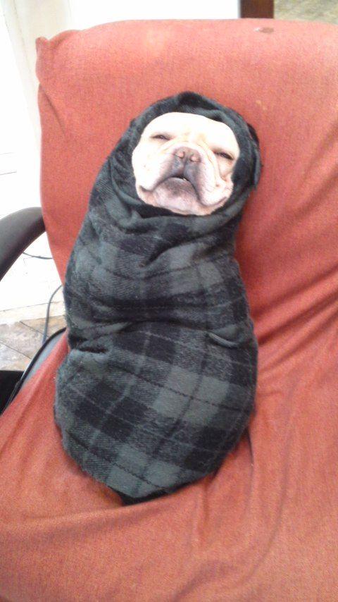 今美容室にきたら看板犬のフレンチブルドッグがありえない状態で爆睡してた(笑)