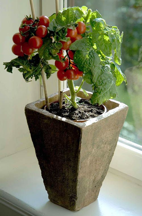 25 best ideas about plantar tomate on pinterest como plantar tomate plantacao de tomate and - Best tomato plants for container gardening ...