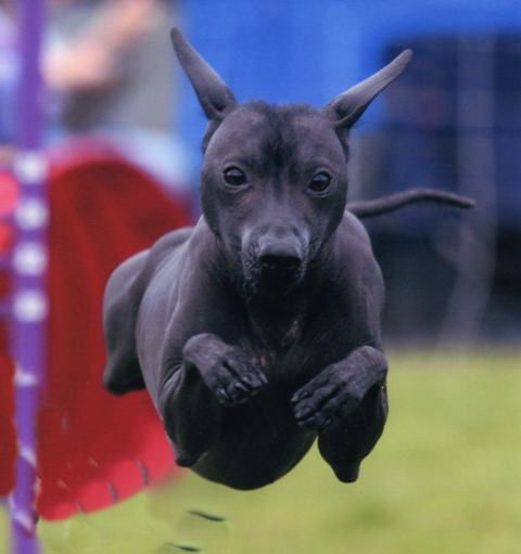 Agility star, Photo by Tien Tran