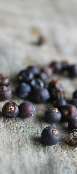 baies de genièvre, juniper berry