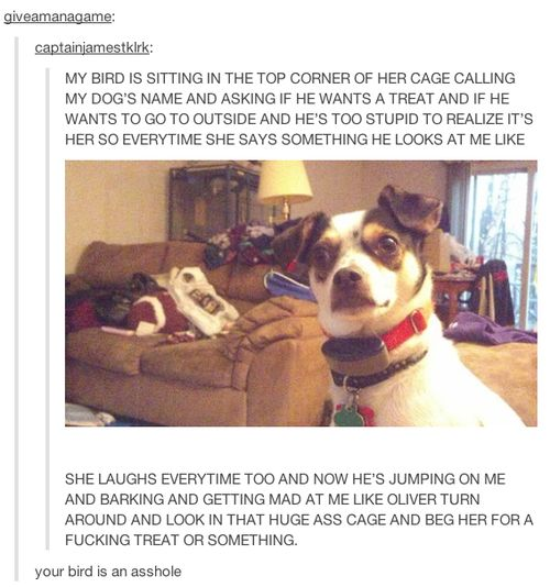 This idiot dog. | 23 Of The Cutest Things That Have Ever Happened On Tumblr