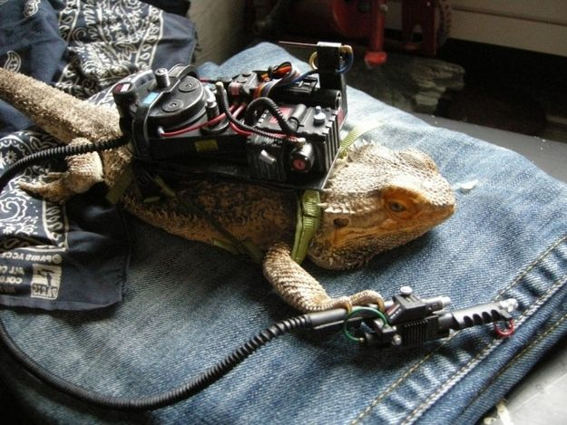 They'll watch Ghostbusters as many times as you want. | Community Post: 21 Reasons You Need To Start Hanging Out With Bearded Dragons