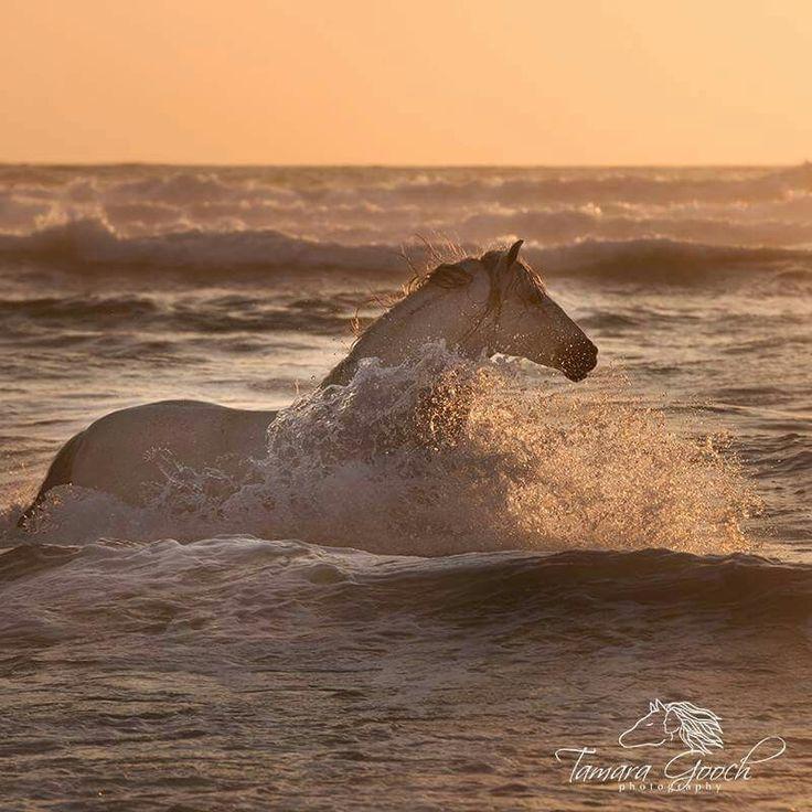Pferd das in der Brandung steht. Der Sonnenuntergang zaubert ein tolles Licht.