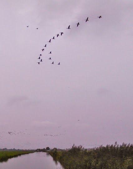 Foto's - Google+ Ganzen, ganzen, ganzen. Ze wonen hier een groot deel van het jaar.