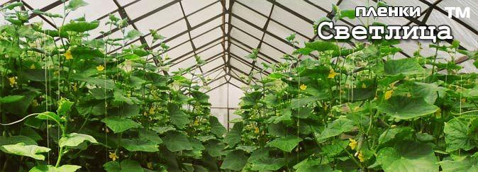 Продукция НПФ Шар - Садовый вар Универсал Бугоркова для заживления ран плодовых деревьев при обрезках плодовых деревьев, в качестве липких ловушек для насекомых