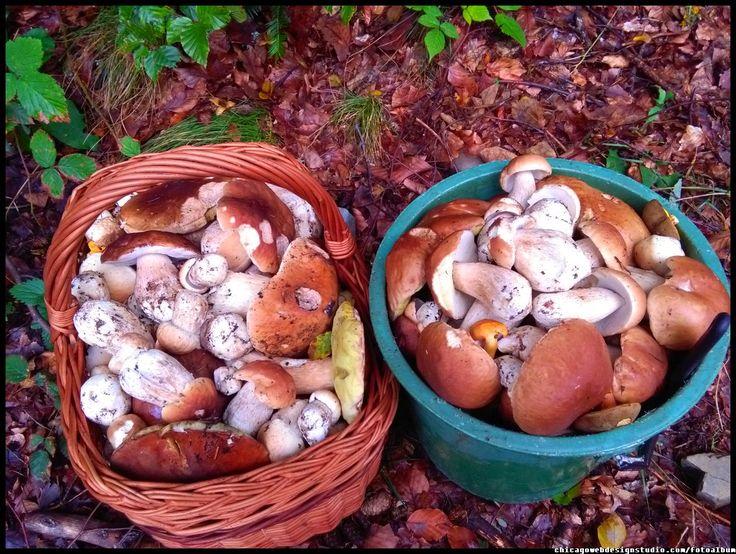 borowiki szlachetne - grzyby - grzybobranie polskie grzyby - borowik szlachetny - boletus #grzyby #mushroom #grzybobranie #borowik #prawdziwek #szlachetny #borowik #forest #na_grzyby ##grzyby #jadalne #grzybki #grzyby_w_Polsce #zbieranie_grzybów #grzybiarz #Beskidy #Poland #lasy_Polskie #Polskie_grzyby