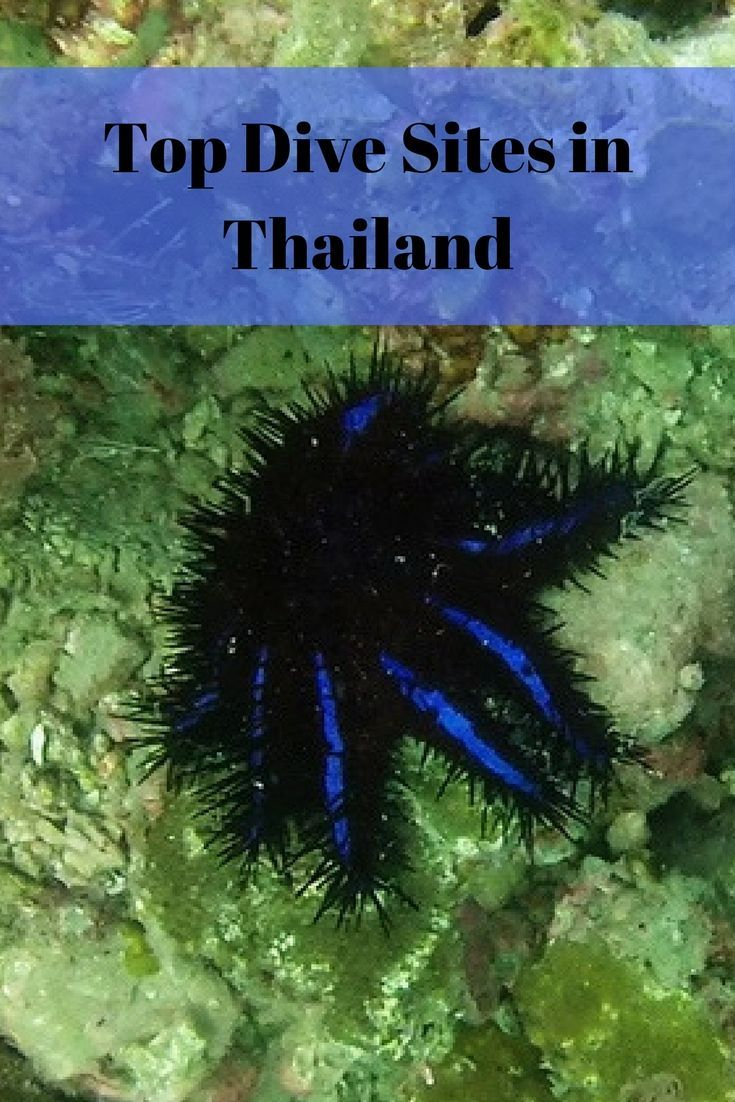 Guide to Diving in Thailand, Dive Sites and Spots, Scuba diving locations and destinations on Thailand islands. Where to learn to dive in Koh Tao for first time divers, best dive sites in Koh Phangan and Phuket, Samui, Koh Similan, Richelieu Rock. Where t #scubadivingdestinations