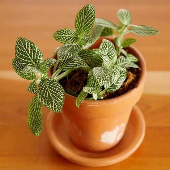 Top Plants for Terrariums  Terrariums came of age with the Victorians and are enjoying a newfound resurgence, fueled in part by their affordability and the continued interest in all things gardening.
