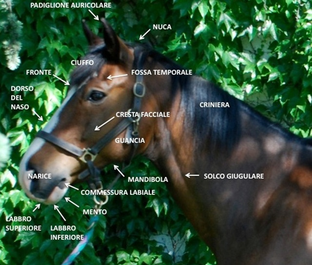 L'#inboundmarketing e l'anatomia del #cavallo: case history. #contentmarketing