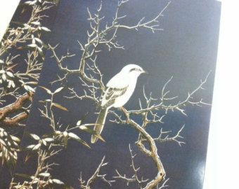 Ventas locas - encantador Set de postales - 2 tarjetas de aves