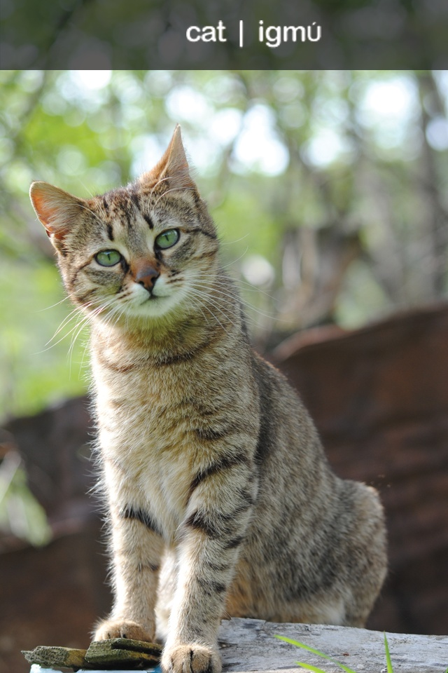 Do You Know The Lakota Word For Quot Cat Quot Native Language