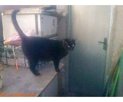 Señor gato  #Perdido #Encontrado #sebusca #extraviado #LealesOrg  Contacto y info: Pulsar la foto o: https://leales.org/perdidos-o-encontrados/gatos-perdidos/senor-gato_i2881 ℹ  Compartimos : TEROR Holase me perdio un gato en la zona de El HoyoTeror...se llama Señor gato y lleva varios dias sin venirtiene puesto collar de goma con un colgante verde con forma de PEZ si compartis os lo agradezco tlfno es 676371900   Acerca de esta publicación:   Esta publicación NO ha sido creada por…