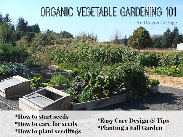 47 best images about seed starting ideas on pinterest for Vegetable garden maintenance