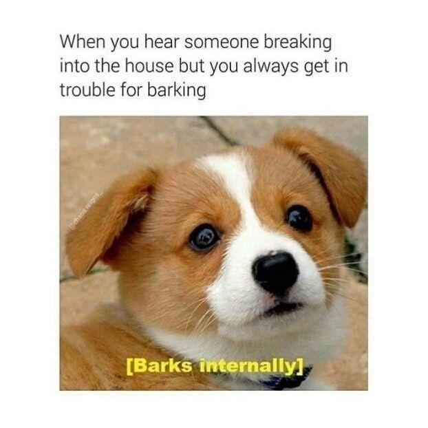 39 Funny Memes For Today 145 Funnyfoto Funny Dog Memes Dog Memes Dog Mems