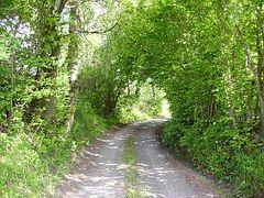 Carril, Árbol, Verde, Camino De Grava