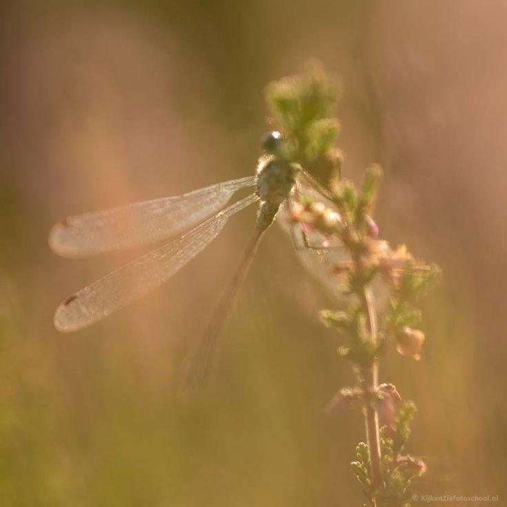 Macrofotografie Macro Photography Bloemen Planten Insecten Details
