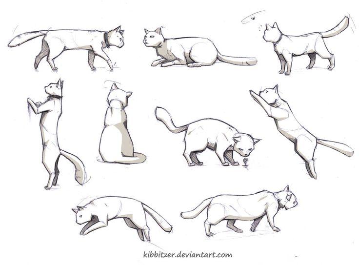 Cat reference by Kibbitzer.deviantart.com on @DeviantArt