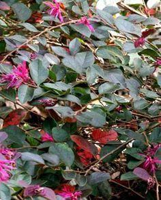 O di... Ombra: elenco piante sempreverdi (e foto) che tollerano l'ombra e…