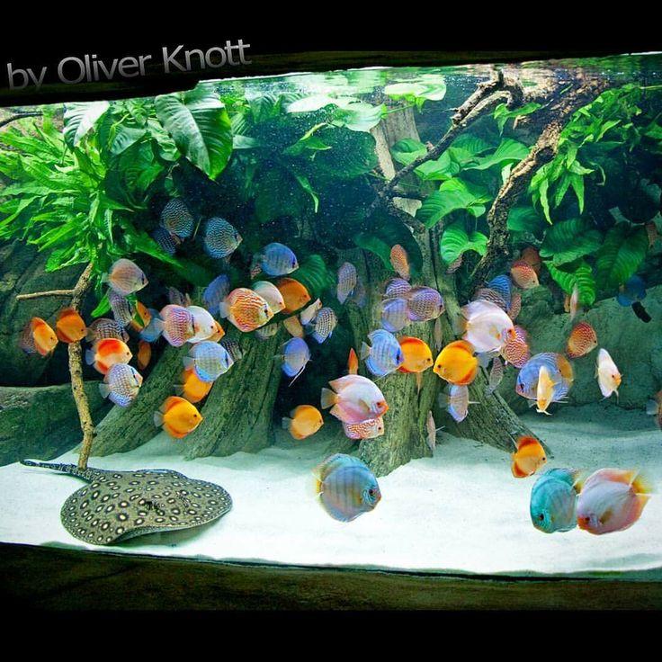 5.500 Liter (Year 2015) Location: Kölle-Zoo Karlsruhe #oliverknott #ok_aqua #köllezookarlsruhe