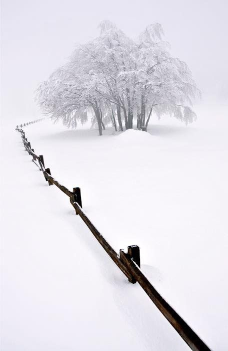 Charming Photos of Winter Scenery