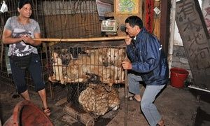 Dog meat summer solstice festival in Yulin, China