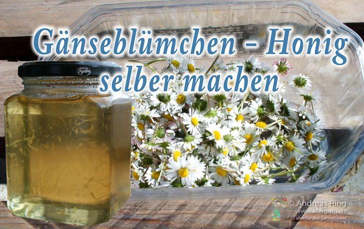 Gänseblümchen-Honig-Bild1